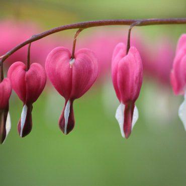 Blomenhus_Trauerfloristik