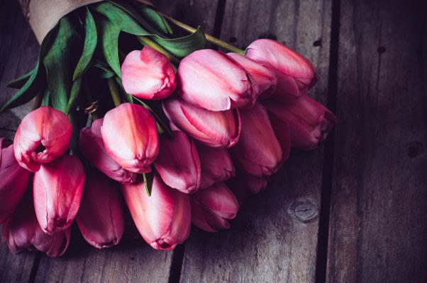 Blomenhus_Tulpen